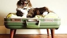 Делаем лежанку для кошки или маленькой собачки своими руками